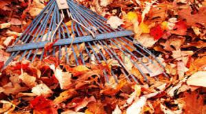 Herfst-Kraaijtuin_bewerkt-1-300x167