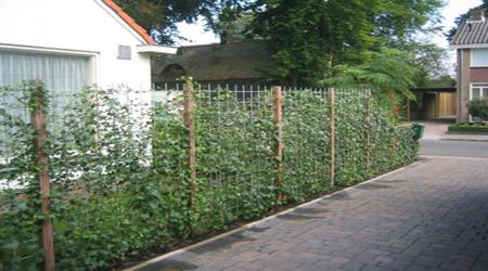 Groene Afscheiding Tuin : Afscheiding tuin groen images groene afscheiding tuin