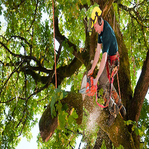 boom kraaijtuin 5