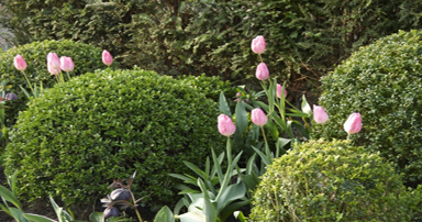 tuintips-kraaij-april-384-x-202