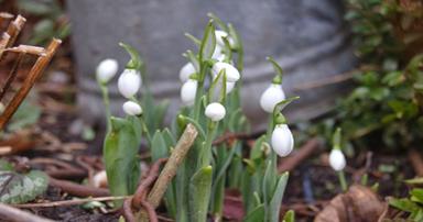 tuintips-kraaij-beplanting-januari-384-x-202
