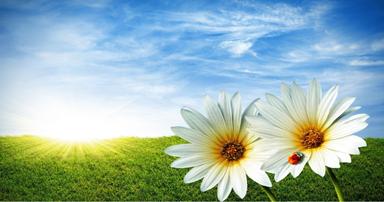 tuintips-kraaij-lente-maart-384-x-202