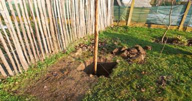 tuintips-kraaij-planten-van-fruitbomen-oktober-384-x-202