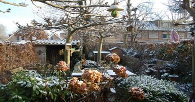 tuintips-kraaij-tuin-januari-384-x-202