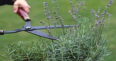 tuintips-kraaij-tuin-snoeien-april-384-x-202