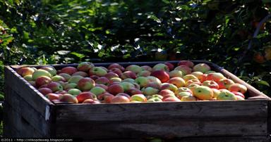 tuintips-kraaij-fruitoogst-september 384 x 202