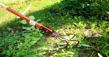 tuintips-kraaij-onkruid-verwijderen-juni-384-x-202