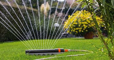 tuintips-kraaij-planten-sproeien-in-juni-384-x-202
