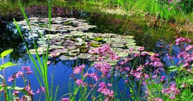tuintips-kraaij-vijverbeplanting-juni-384-x-202